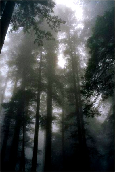 fog provides a lot of moisture in the temperate rain forest